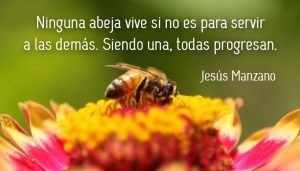 reflexion-abejas-jesus-manzano